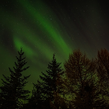 Northern Lights above the trees.
