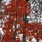 Fall, Jack Pine Trail