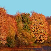 Amazing Fall Leaves