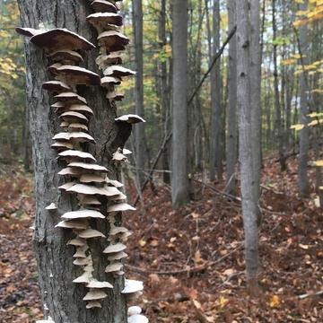 Mushroom Condos