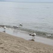Seagulls Having Fun