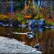 Fall swim