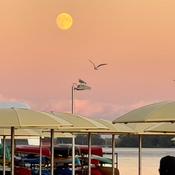 Sail on Golden Moon