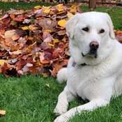 Beauté parmi les feuilles ......