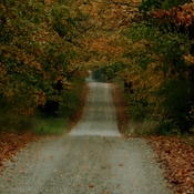 Autumn colours on a country road