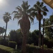juan les pins plein soleil