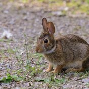 Morning Bunny at Tommy Thompson Park