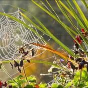 Web, Elliot Lake.