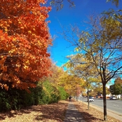 October 19 2021 Good morning!:) Glowing Autumn in Thornhill