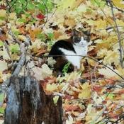 Un chat caché dans le bois.