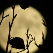 October Hunter Full Moon