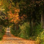 Awesome Autumn lane
