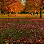 Parc Jacques-Cartier, Gatineau