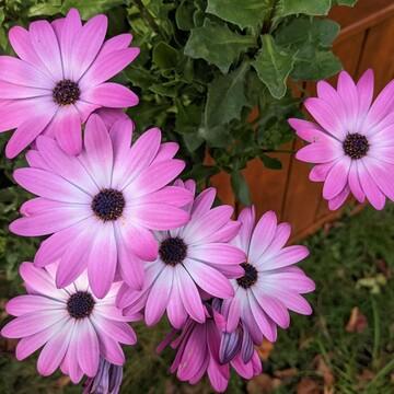pretty flowers after heavy rainfall