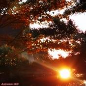 Oct 20 2021 18C Good evening!:) Autumn Sunset glory in Thornhill.