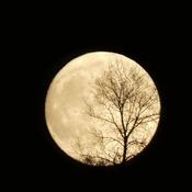 La veille de la pleine lune d'octobre! 19-10-21
