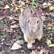 Tame bunny at Mud Lake!