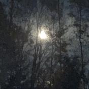 Beautiful Moon through the trees