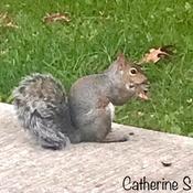 Squirrel's 'Happy Hour' ;)
