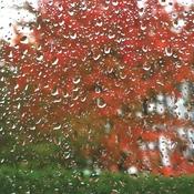Feuilles mortes sur la pluie.