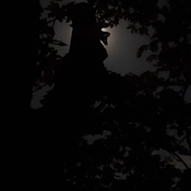 face in the full moon