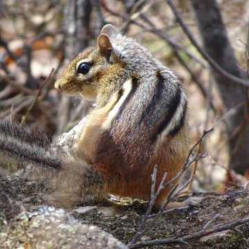 A Squirrel & A Chipmunk