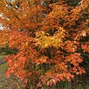 Fall 2021 New Brunswick