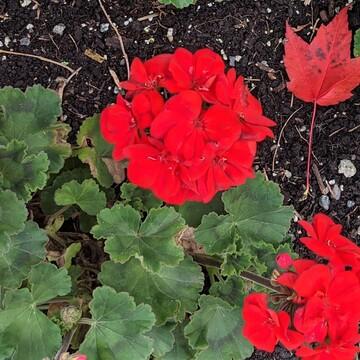 beautiful summer flowers in October