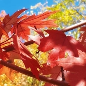 Oct 22 2021 Happy Friday:) Colorful Autumn in Thornhill