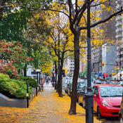 Golden Street.