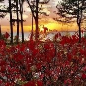 Autumn red!!