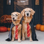 These two Harry Pawters are ready for their first day at Hogwarts!