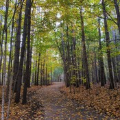 Fall colors at the Huron Nature Trail