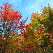 La nature en couleur