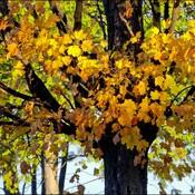 Late fall leaves, Elliot Lake.