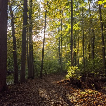 Medway Valley Heritage Forest