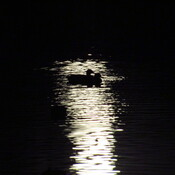 Ducks and the light of the full moon