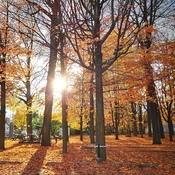 Belles sont les couleurs de l'automne!