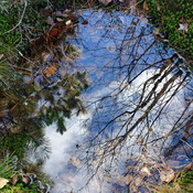 Scenery in A Water Puddle