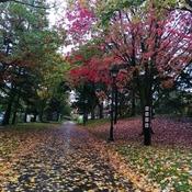 Aquarelle d'automne à Québec