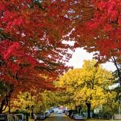 perfect fall colours
