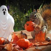 Reddie loves Halloween.