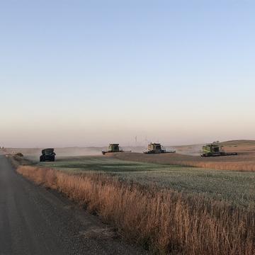 Final harvest