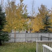 Beautiful Fall October