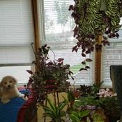 Multi Plants