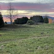 Les chevreuils au coucher de soleil
