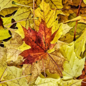 Froide automne