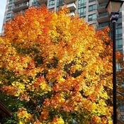 Oct 24 2021 5C Good morning!:) Late Autumn, happy Sunday! Thornhill