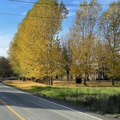 L'automne dans la bayonne nord