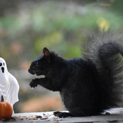 Black squirrel sees a ghost.
